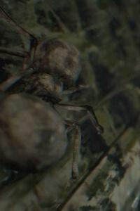 Araignées - Resident Evil 7