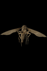 Insectes volants - Resident Evil 7