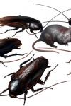 Resident Evil 2 – Cafards