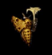 Resident Evil 2 - Papillon